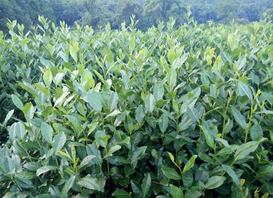 极飞科技:布局智慧农业,开启农业生产活动的定制化作业时代