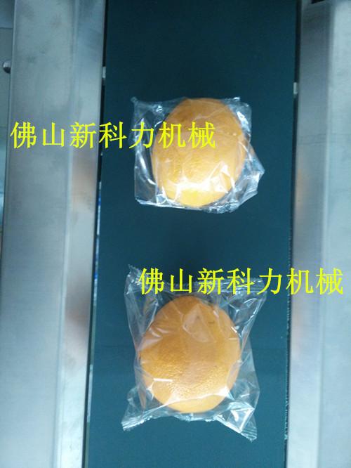 脐橙113001_副本.jpg